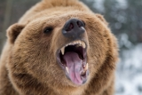 6 meilleurs sprays pour ours pour vous sauver la vie en 2020 (révisés et testés)